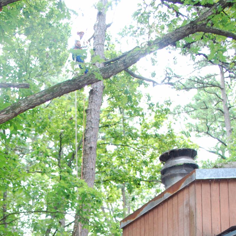 Tree Docs Tree Service