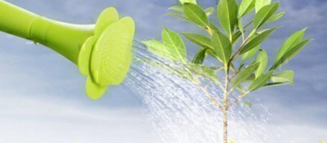 watering sapling